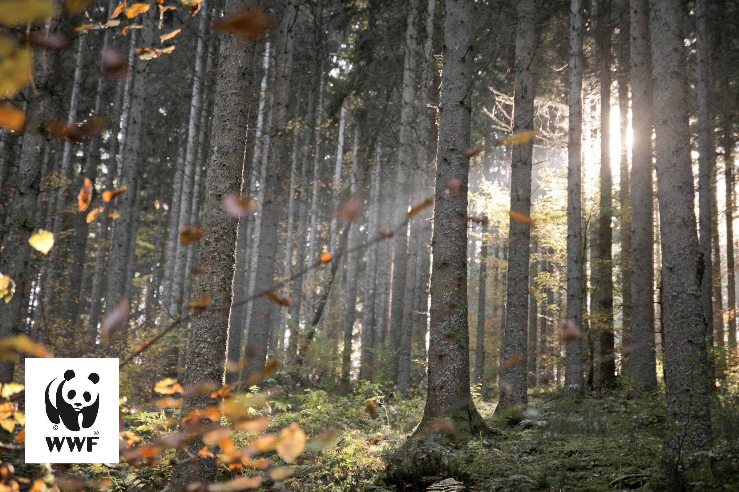 Urwälder der Zukunft