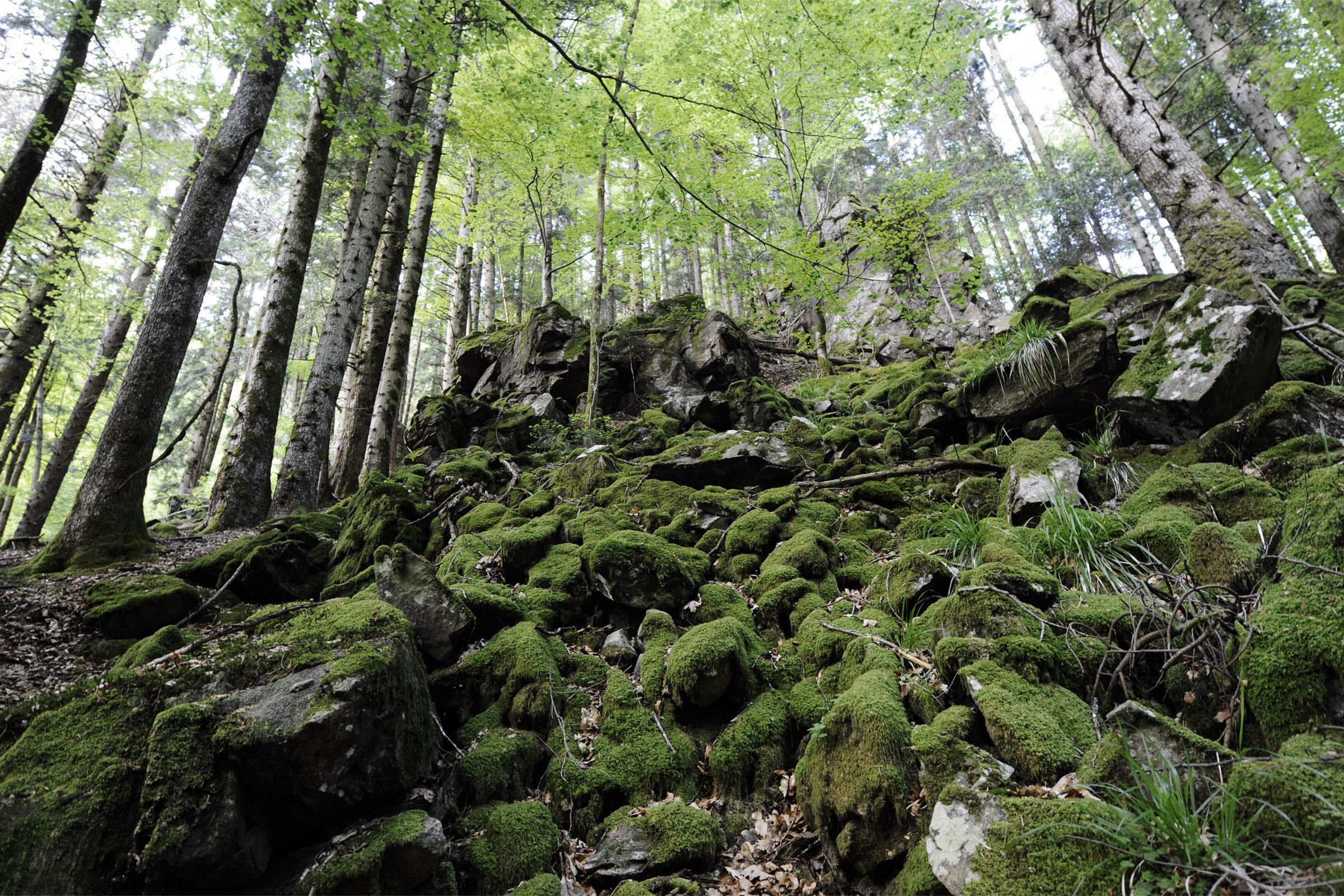 Blockhalde im Bannwald der Teichschlucht am 04 05 2011 beim Simonswaelder Tal im Schwarzwald
